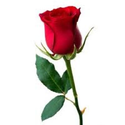 Fragrance de Rose
