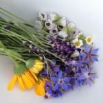 Fleurs et herbes, épices et huiles essentielles